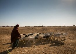Microinsurance to help Ethiopian farmers protect against drought