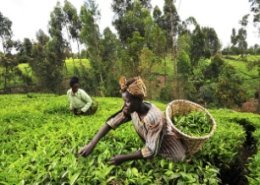 Africa Climate Smart Agriculture Summit: Innovations, Partnerships and Financing