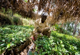 AfDB approves US$15mn equity investment in Africa to promote food security