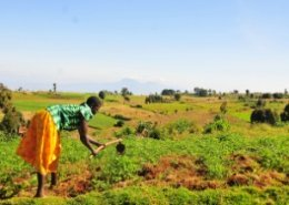 Emerging agriculture technologies to optimise farmers' output in Africa