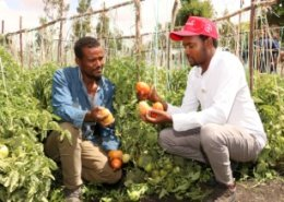 Bayer and Fair Planet extend collaborates for high-quality vegetable seeds in Ethiopia