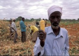 World Bank supports FAO's agri-recovery effort in Mozambique