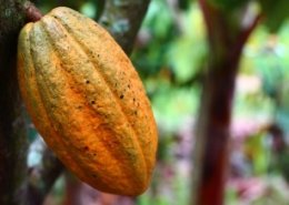 AfDB and partners sign agreement to boost Ghana's cocoa production