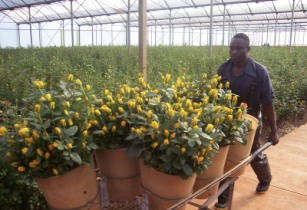 Hortiflor all set to open on 9 October in Zimbabwe