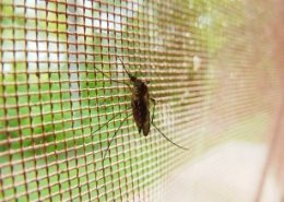 BASF launches new long-lasting insecticide-treated mosquito nets against malaria