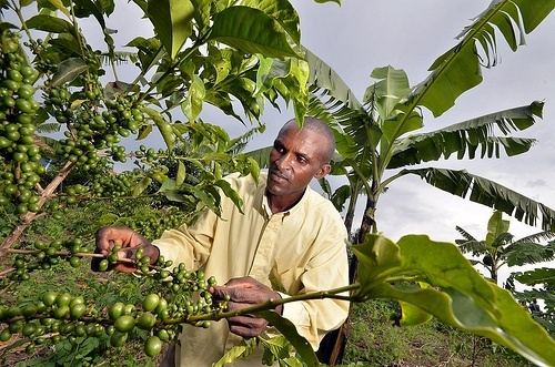 rwanda coffee CIAT International Center for Tropical Agriculture