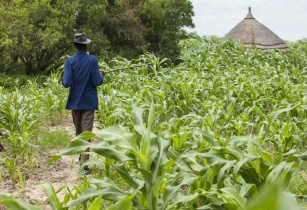 AfDB, FAO and South Sudan's government partner to boost agricultural markets