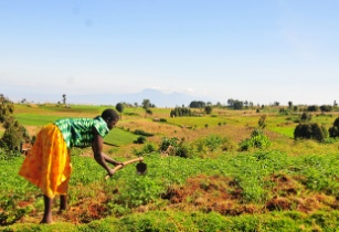 Emerging agriculture technologies to optimise farmers' output
