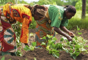 agricultural biotechnology in kenya Agricultural biotechnology in kenya final draft introduction agricultural biotechnology is one scientific invention that continues to cause debates within the world.