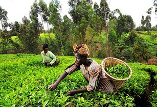 African leaders to increase agriculture investment