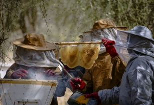 Beekeeping CIFOR Flickr