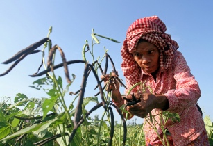 Better Life Farming to unlock potential of smallholder farmers in developing countries