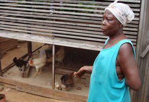 Chicken Farmer in Ghana USAID Africa Bureau Wikimedia Commons