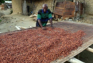 Cocoa  beans Africa
