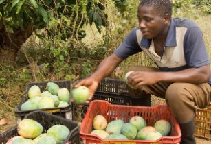 Organic farming sees record growth worldwide