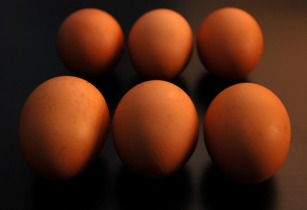 Eggs Serfontein Kuikens Pas Reform Hatchery