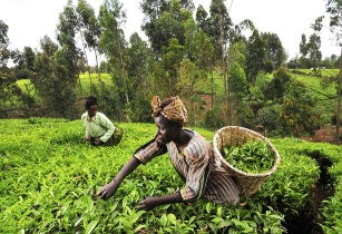 Farmers lobby calls for Kenya agriculture policy change