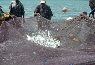 Fish farming kenya
