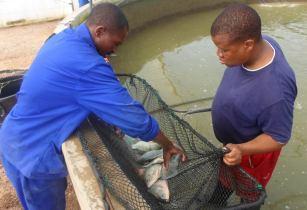 Намибия: Новые возможности для увеличения производства продукции аквакультуры