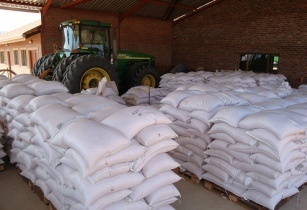 Maize collections CIMMYT Africa