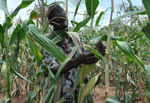 Mobile agro-weather tool developed in Kenya