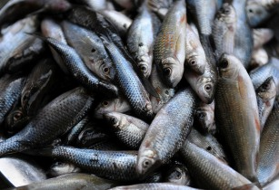 Nigeria plans to boost local fish production