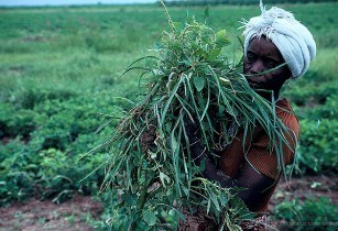 Nigeria USAID agriculture loan deal