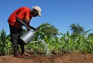 Nigerian government creates new job initiative for young farmers