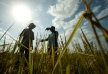 AfDB grants US$11.23mn to Madagascar�s energy, agriculture and pest control
