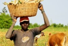 AfDB approves US$42mn grant to develop Sudan�s agribusiness