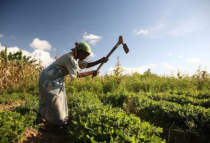 Oxfam calls for more protection for Malawian farmers