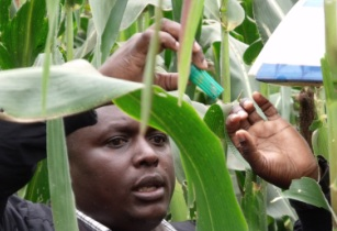 CABI launches space-age technology to fight crop-devastating pest outbreaks in Kenya