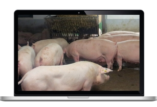 EuroTier digital launches new technical TV programme for pig farmers