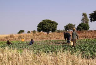 Zambia Farm - Bioversity International - Flickr