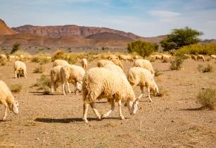 AgDevCo invests US$3mn into Uzima Chicken Ltd