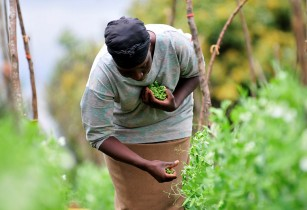 Improving farming and food production in Africa