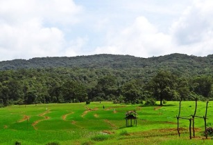 Spatial database to improve rice production