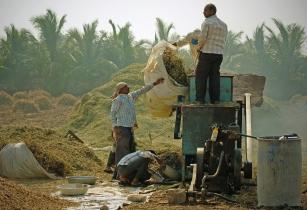 IFC, WFP collaborate to finance smallholder farmers in Rwanda and Tanzania
