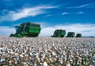 Bayer CropScience AG and Performance Plants Inc. (PPI) have entered into a research and commercial license agreement, giving Bayer exclusive rights for PPI's Heat & Drought Tolerance Technology (HDT™) in cotton