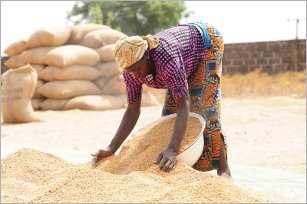 Should, Ghana, import, rice, africa, NRDS, Africa
