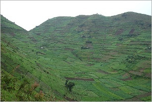 Saudi Arabia investing heavily in African farmland for food