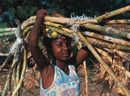 Smallholder sugar farming sector in Swaziland is facing a severe financial crisis