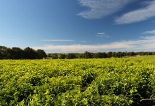 Sustainable agriculture to fight climate change and involuntary migration