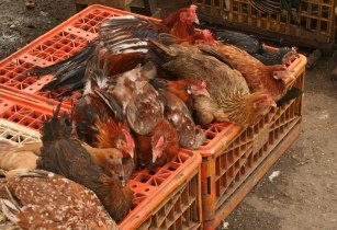 SA's Western Cape Minister says that we must be vigilant in the face of bird flu