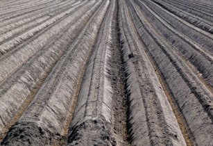 A close up view over the long lines in the soil of the fields.jpg The Netherlands spring 2012