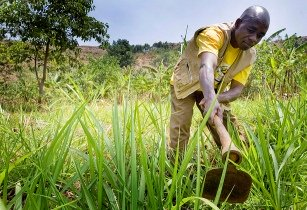 African farmers turn to climate-smart agriculture