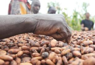 Africa needs to focus on agro-industrialisation of cocoa