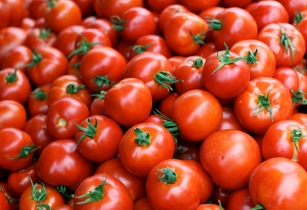 Tomato production in Tunisias Nabeul to rise