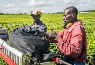 AfDB helps to create 35,000 jobs in agricultural SMEs