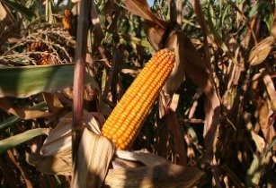 Fall armyworm threat looms large over South Africa